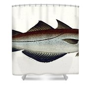 Pollack Shower Curtain by Andreas Ludwig Kruger