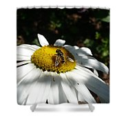 Pollen Collection Daisy  Shower Curtain