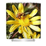 Pollen-laden Bee On Yellow Daisy Shower Curtain