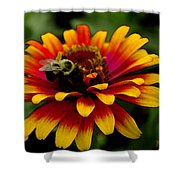 Pollenating Bumblebee Shower Curtain