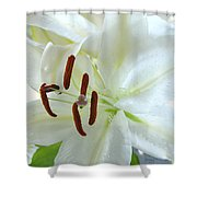 Pollinated White Tiger Lily Shower Curtain