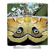 Polyphemus Moth Shower Curtain