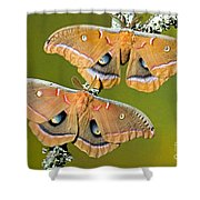 Polyphemus Moths Shower Curtain