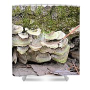 Polypore Abstract Shower Curtain
