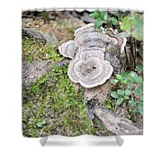 Polypores And Moss Shower Curtain