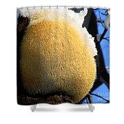 Pom Pom Mushroom Shower Curtain