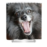 Pom Yawn Shower Curtain