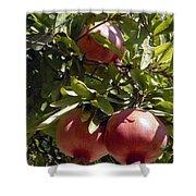 Pomegranate Tree  Shower Curtain