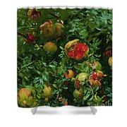 Pomegranates    Majorca Shower Curtain