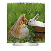 Pomeranian With Rabbit Shower Curtain