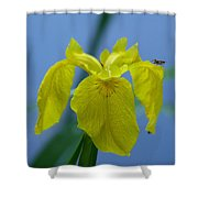 Pond Iris Shower Curtain