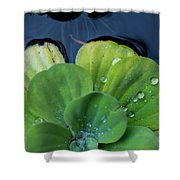 Pond Lettuce Shower Curtain