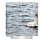 Pond Swan Shower Curtain