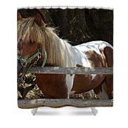 Pony Horse Shower Curtain