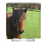 Pony On The Moors Shower Curtain