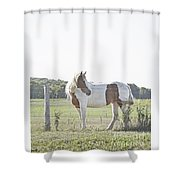 Pony Pride Shower Curtain