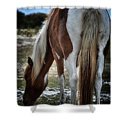Pony Tail Shower Curtain