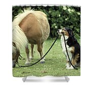 Pony With Lead Rope Held By Sitting Dog Shower Curtain