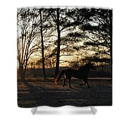 Pony's Evening Pasture Trot Shower Curtain