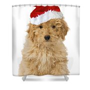 Poodle In Christmas Hat Shower Curtain