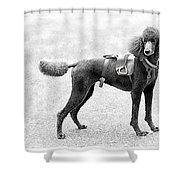 Poodle Jockey Triptych Shower Curtain