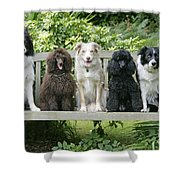 Poodles And Other Dogs On A Bench Shower Curtain