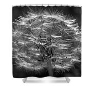 Poof - Black And White Shower Curtain