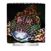 Poopaa Hawaiian Hawk Fish Shower Curtain