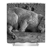 Pooped Puppy Bw Shower Curtain by Steve Harrington