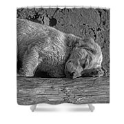 Pooped Puppy Bw Shower Curtain