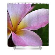 Pop Of Pink Plumeria Shower Curtain