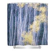 Poplar Trees In Autumn, Grey Creek Shower Curtain