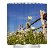 Poppies And Fence 2am-110209 Shower Curtain
