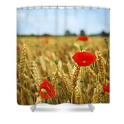 Poppies In Grain Field Shower Curtain by Elena Elisseeva