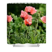 Poppies In My Garden Shower Curtain