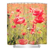 Poppies In Tuscany - Italy Shower Curtain