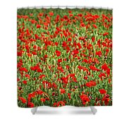 Poppies In Wheat Shower Curtain