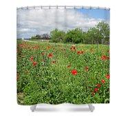 Poppies Near Hondo Shower Curtain