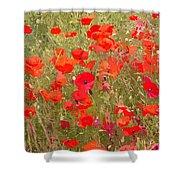 Poppies Vii Shower Curtain