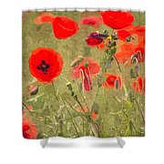 Poppies X Shower Curtain
