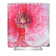 Popping Shower Curtain