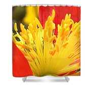 Poppy 3 Shower Curtain