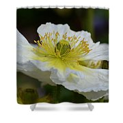 Poppy Adoration Shower Curtain