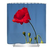 Poppy And Buds Shower Curtain