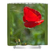 Poppy Blowing In The Wind Shower Curtain