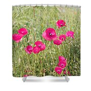 Poppy Blush Shower Curtain