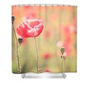 Poppy Field In Tuscany - Italy Shower Curtain