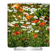 Poppy Fields - Beautiful Field Of Spring Poppy Flowers In Bloom. Shower Curtain