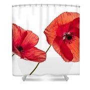 Poppy Flowers On White Shower Curtain by Elena Elisseeva