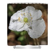 Poppy From The Angel's Choir Mix Shower Curtain